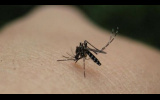 Ο Δήμος Νάουσας ενημερώνει για τον ιό του Δυτικού Νείλου