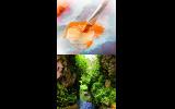 Απονομή βραβείων και έκθεση ζωγραφικής για τον ποταμό Τριπόταμου